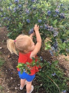 Family Picking Blueberries