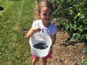 Pick Your Own Apples & Blueberries- Orchards Near Frederick & Hagerstown MD