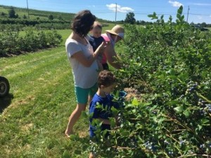 Enjoy Our Bakery Items or Pick Your Own Apples & Blueberries from the Orchards in Frederick, Thurmont & Hagerstown, MD