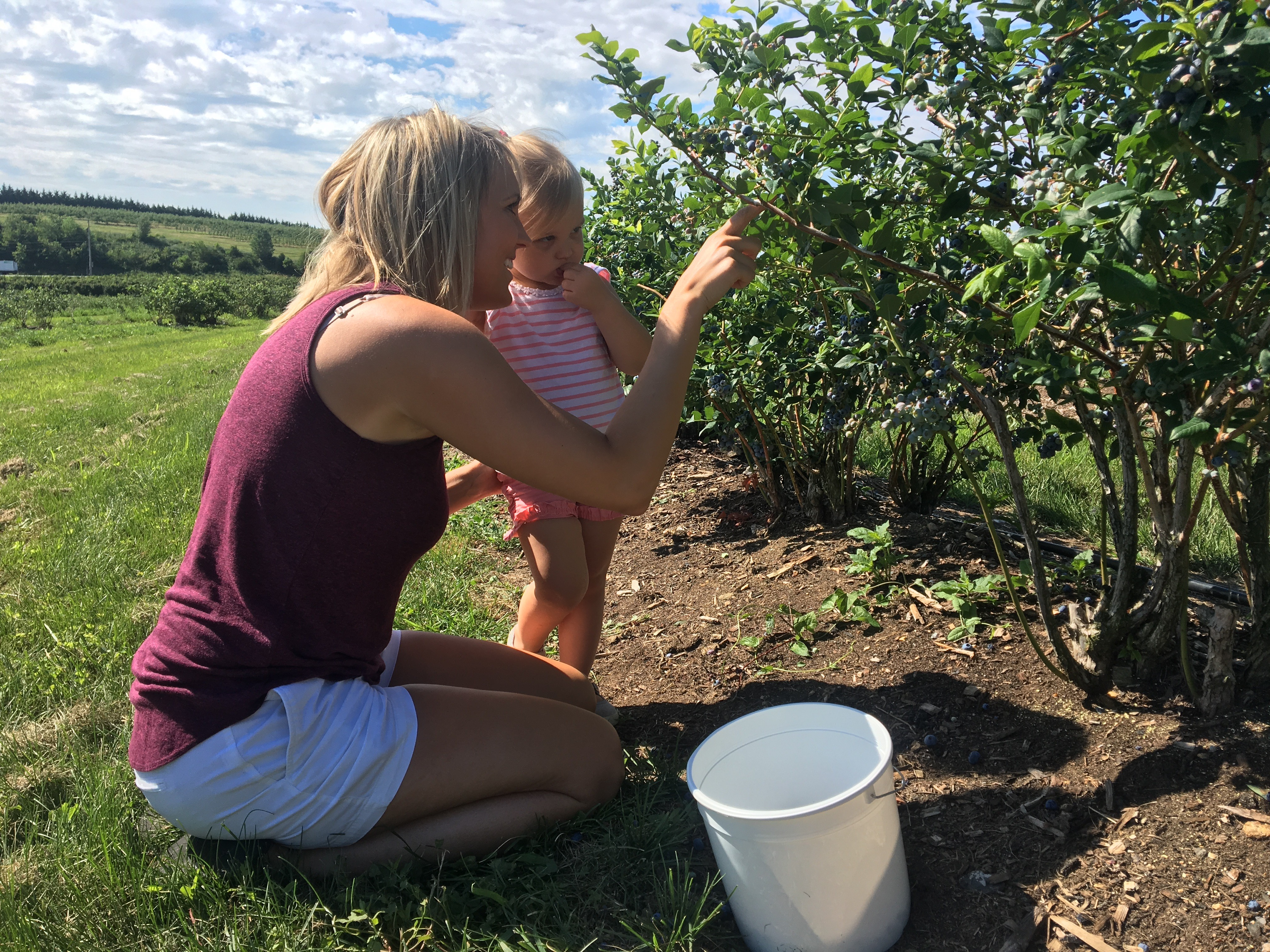 Family Picking Blueberry 2