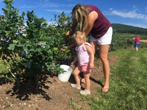 Family Picking Blueberry 4